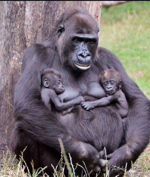 animal-motherhood-36 78+ Heart-touching Photos of Mothers and Their Babies