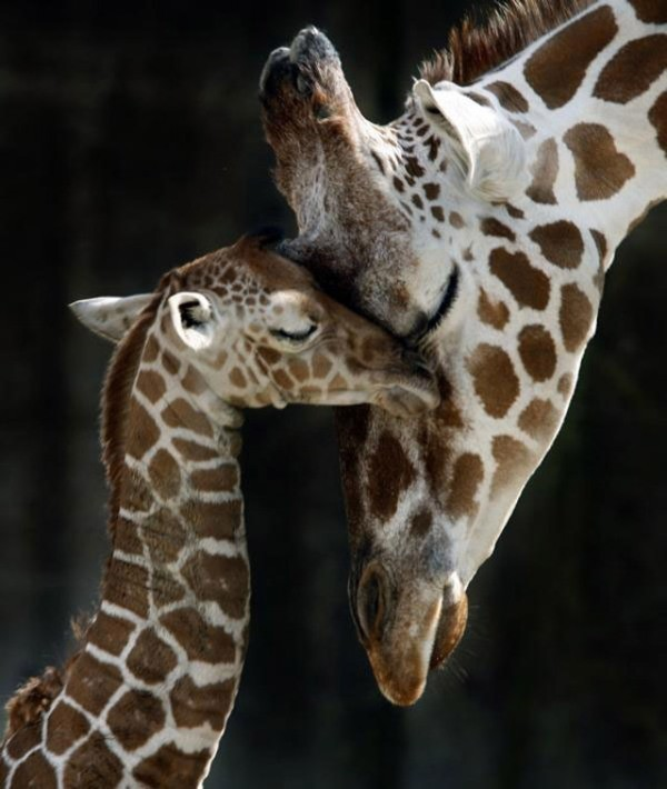 animal-motherhood-37 78+ Heart-touching Photos of Mothers and Their Babies
