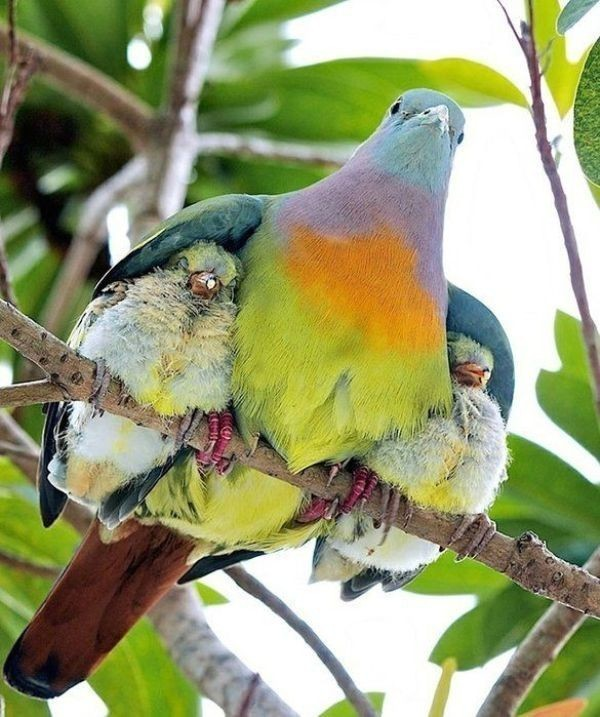 animal-motherhood-38 78+ Heart-touching Photos of Mothers and Their Babies