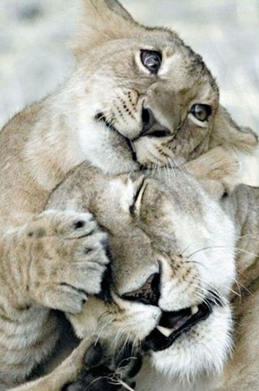 animal-motherhood-4 78+ Heart-touching Photos of Mothers and Their Babies