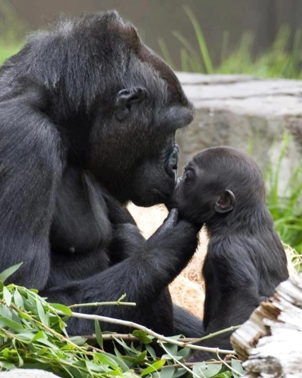 animal-motherhood-40 78+ Heart-touching Photos of Mothers and Their Babies