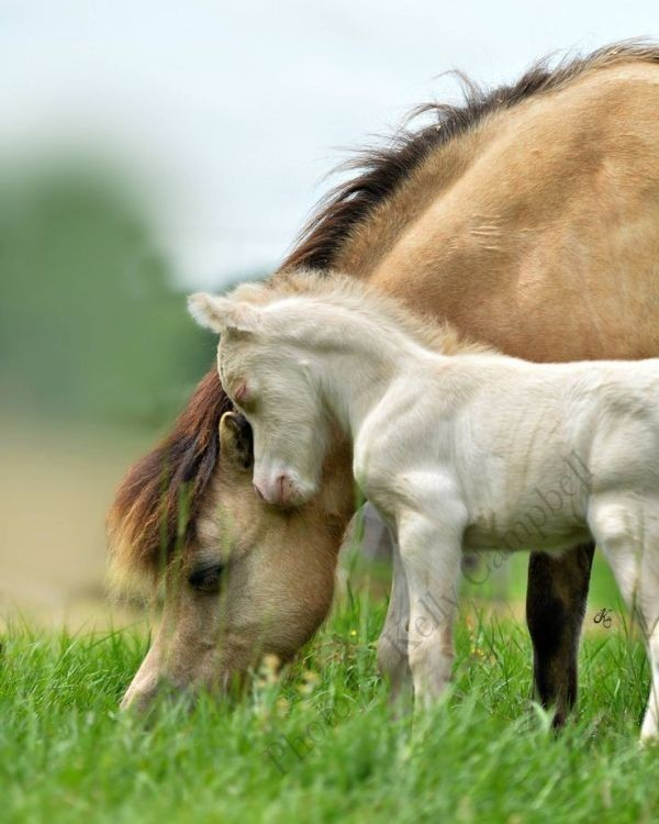 animal-motherhood-41 78+ Heart-touching Photos of Mothers and Their Babies