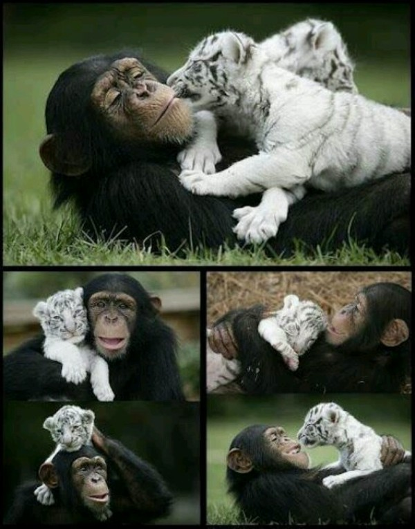 animal-motherhood-42 78+ Heart-touching Photos of Mothers and Their Babies