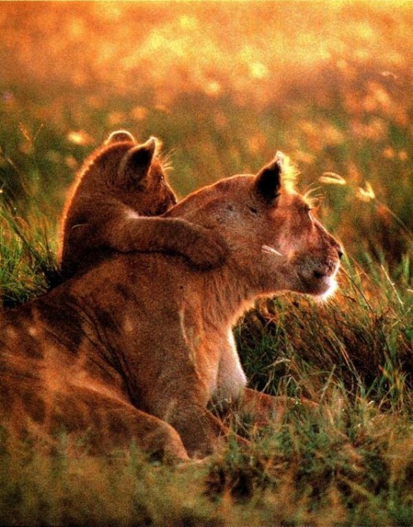 animal-motherhood-43 78+ Heart-touching Photos of Mothers and Their Babies