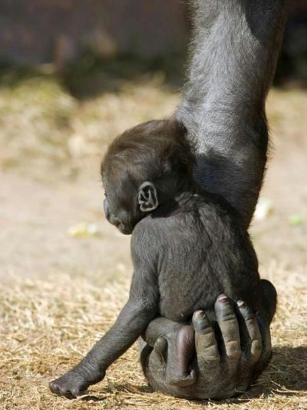 animal-motherhood-48 78+ Heart-touching Photos of Mothers and Their Babies