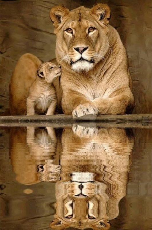animal-motherhood-5 78+ Heart-touching Photos of Mothers and Their Babies
