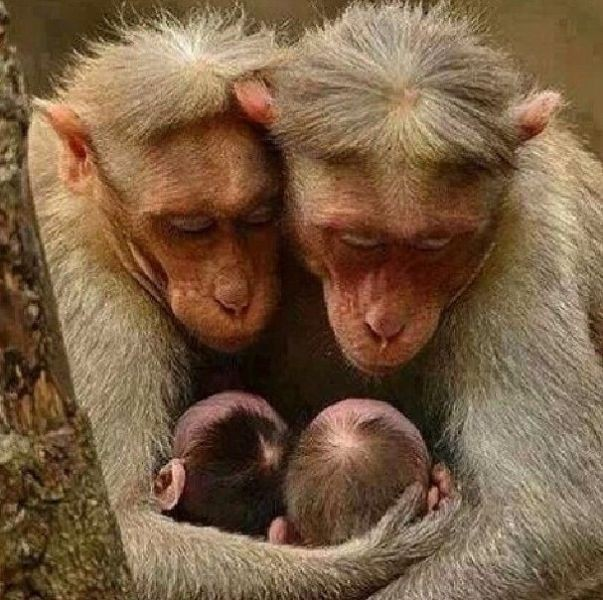 animal-motherhood-50 78+ Heart-touching Photos of Mothers and Their Babies