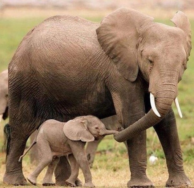 animal-motherhood-51 78+ Heart-touching Photos of Mothers and Their Babies