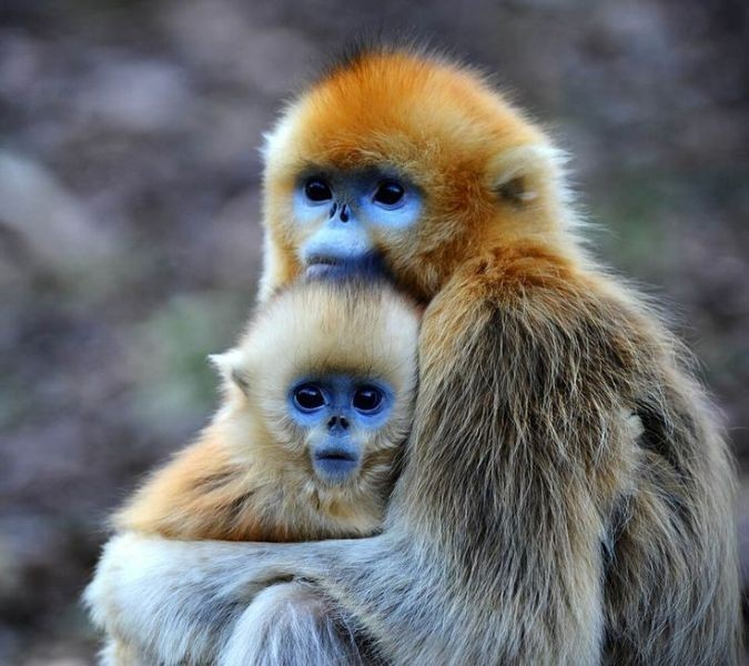 animal-motherhood-55 78+ Heart-touching Photos of Mothers and Their Babies
