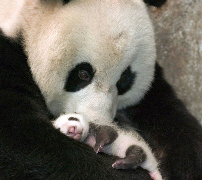 animal-motherhood-56 78+ Heart-touching Photos of Mothers and Their Babies