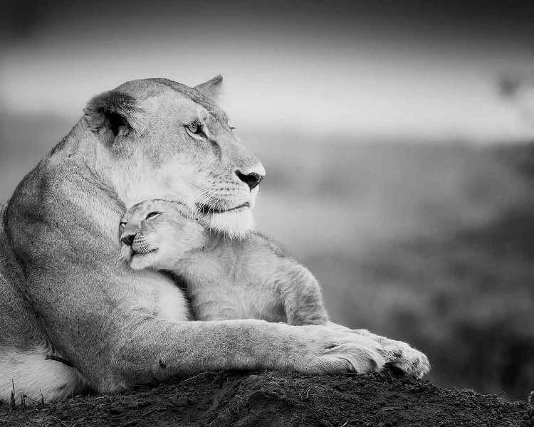 animal-motherhood-57 78+ Heart-touching Photos of Mothers and Their Babies