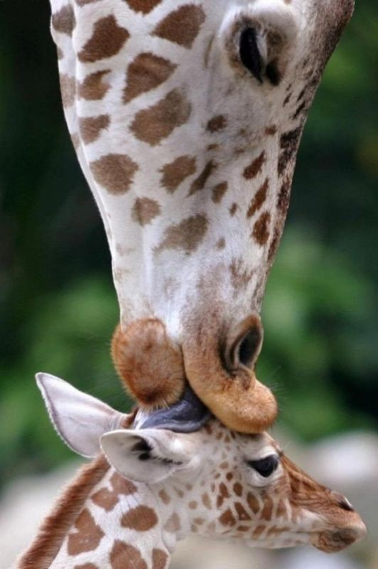 animal-motherhood-6 78+ Heart-touching Photos of Mothers and Their Babies