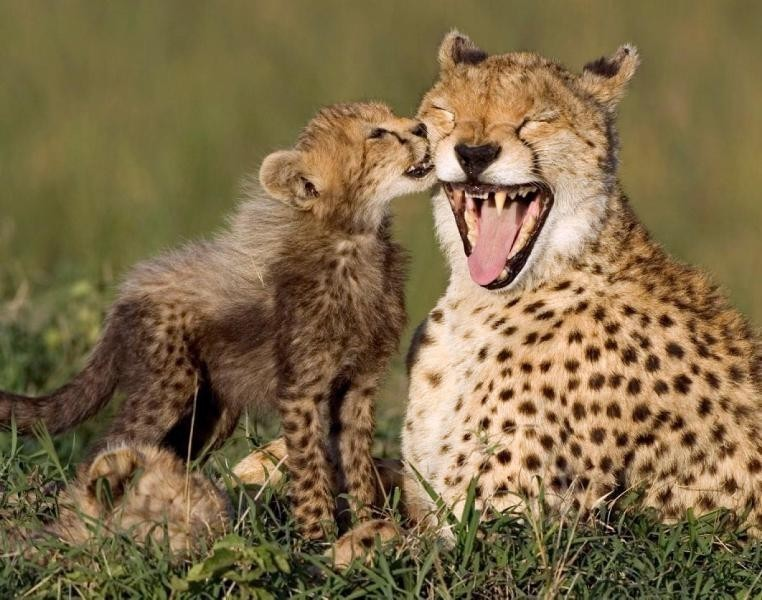 animal-motherhood-60 78+ Heart-touching Photos of Mothers and Their Babies