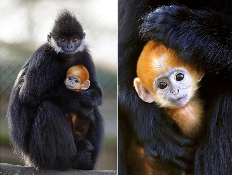 animal-motherhood-62 78+ Heart-touching Photos of Mothers and Their Babies