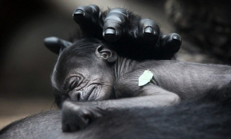 animal-motherhood-66 78+ Heart-touching Photos of Mothers and Their Babies