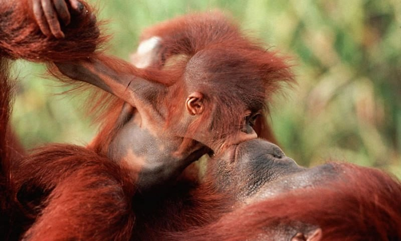 animal-motherhood-67 78+ Heart-touching Photos of Mothers and Their Babies