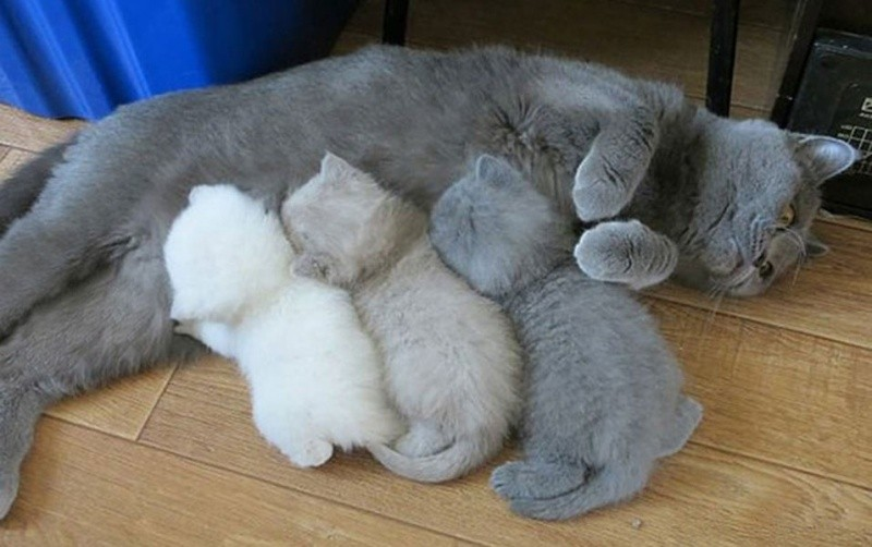 animal-motherhood-69 78+ Heart-touching Photos of Mothers and Their Babies