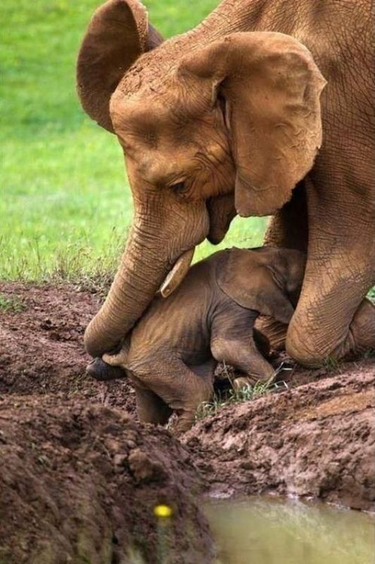 animal-motherhood-7 78+ Heart-touching Photos of Mothers and Their Babies