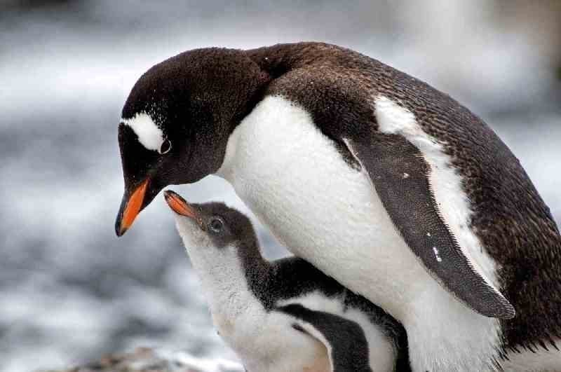 animal-motherhood-70 78+ Heart-touching Photos of Mothers and Their Babies