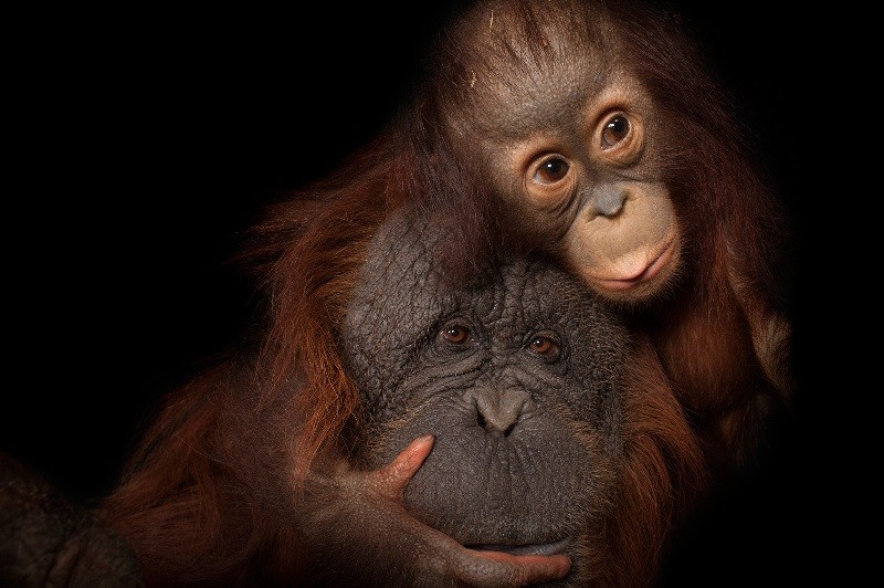 animal-motherhood-72 78+ Heart-touching Photos of Mothers and Their Babies