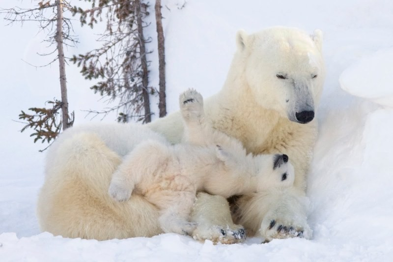 animal-motherhood-73 78+ Heart-touching Photos of Mothers and Their Babies
