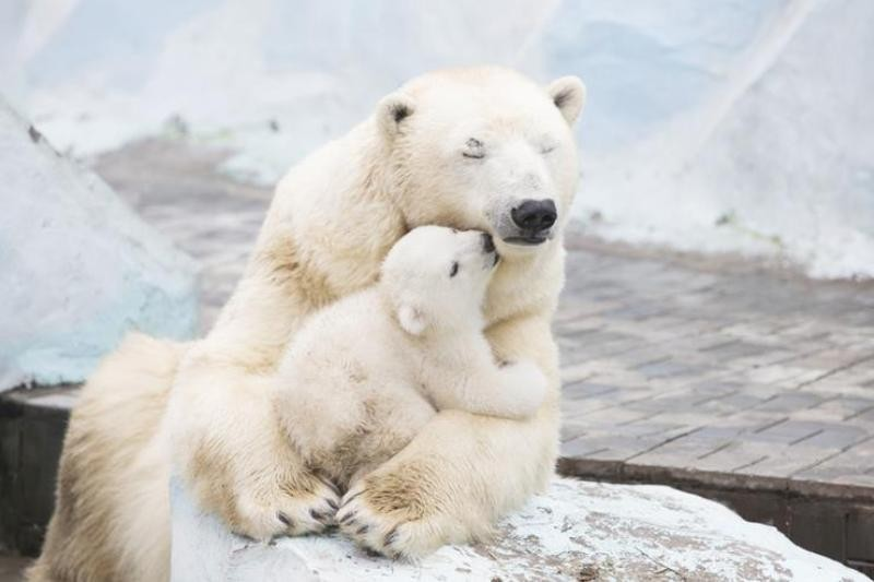animal-motherhood-74 78+ Heart-touching Photos of Mothers and Their Babies