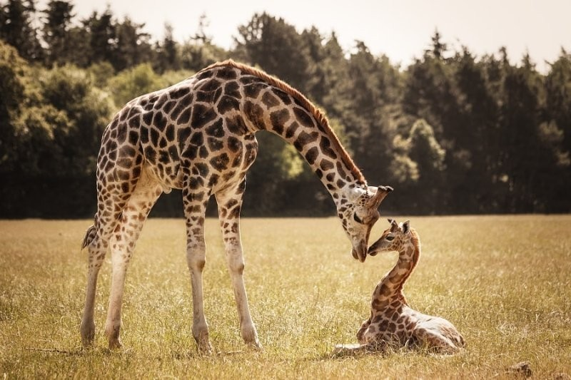animal-motherhood-78 78+ Heart-touching Photos of Mothers and Their Babies