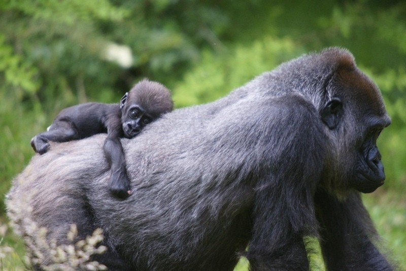 animal-motherhood-79 78+ Heart-touching Photos of Mothers and Their Babies