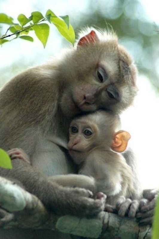 animal-motherhood-8 78+ Heart-touching Photos of Mothers and Their Babies
