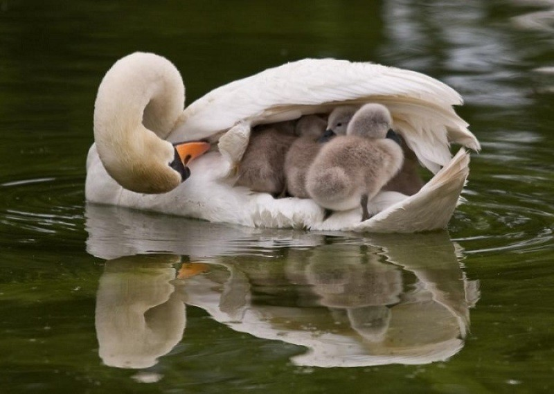 animal-motherhood-81 78+ Heart-touching Photos of Mothers and Their Babies