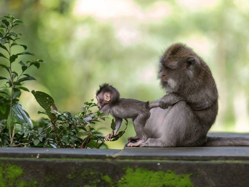animal-motherhood-83 78+ Heart-touching Photos of Mothers and Their Babies