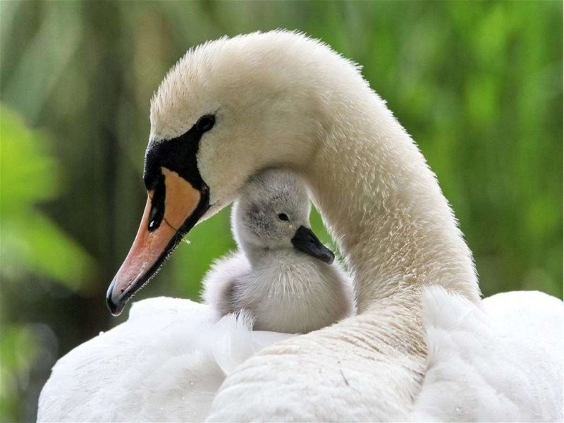 animal-motherhood-84 78+ Heart-touching Photos of Mothers and Their Babies