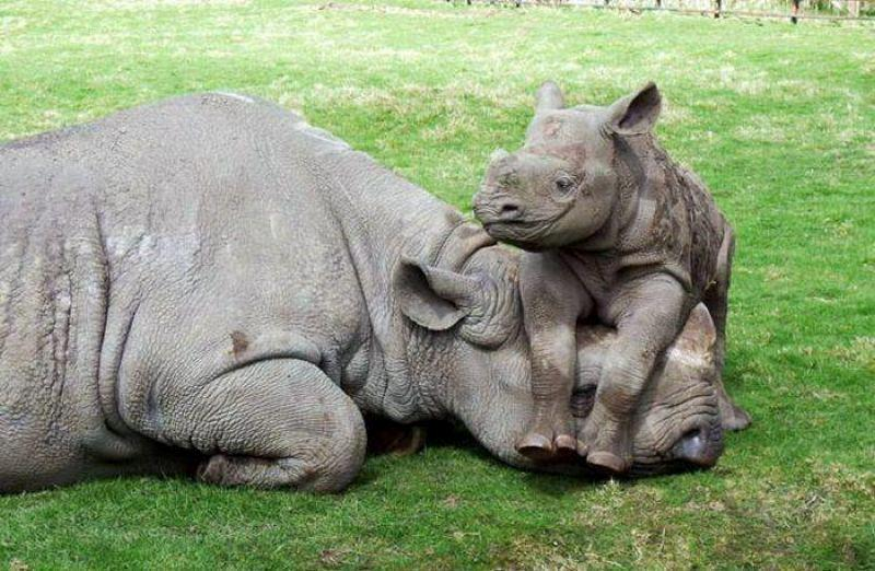 animal-motherhood-85 78+ Heart-touching Photos of Mothers and Their Babies
