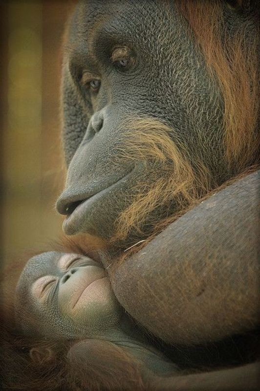 animal-motherhood-9 78+ Heart-touching Photos of Mothers and Their Babies