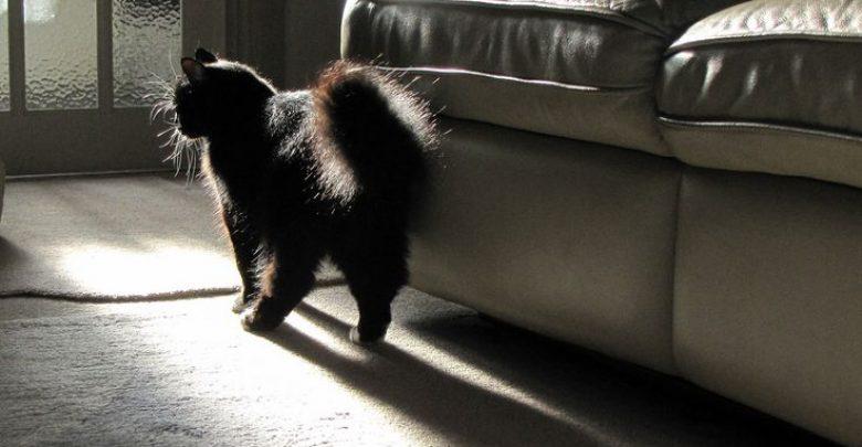 "Photo of ""Cat Spraying No More"".. No More Pee Everywhere"