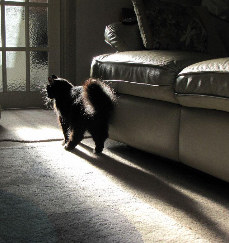 black-cat Best 7 Solar System Project Ideas
