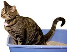 """cat-on-bucket """"Cat Spraying No More"""".. No More Pee Everywhere"""