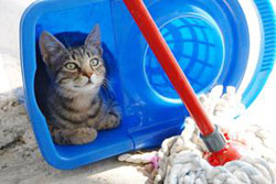 "clean-cat-urine ""Cat Spraying No More"".. No More Pee Everywhere"