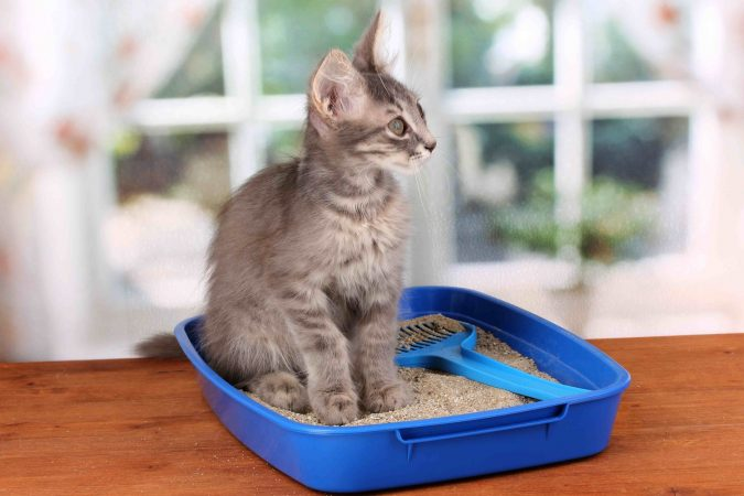 """kitty-litter-675x450 """"Cat Spraying No More"""".. No More Pee Everywhere"""