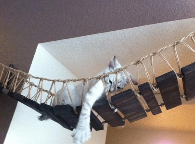 a-cat-on-Indiana-Jones-Cat-Bridge-2-675x500 15+ Cat Furniture Pieces for Cat Lovers in 2017