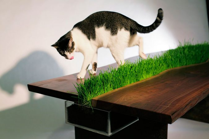 cat-furniture-Grass-Table-675x449 16 Stylish Cat Furniture Pieces for Cat Lovers
