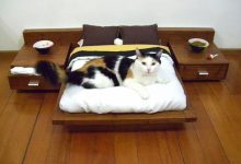 Photo of 15+ Cat Furniture Pieces for Cat Lovers in 2020