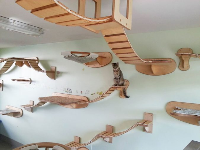 overhead-cat-playground-room-goldtatze-1-675x506 15+ Cat Furniture Pieces for Cat Lovers in 2017