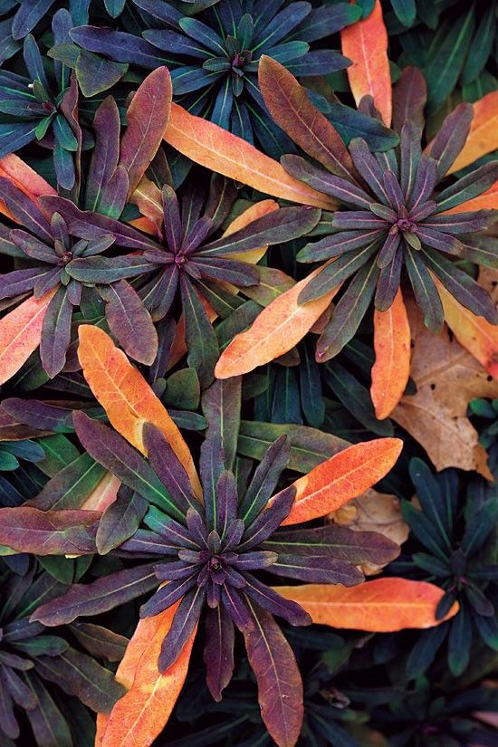 Color-Chameleon-Plants Trending: 15 Garden Designs to Watch for in 2020