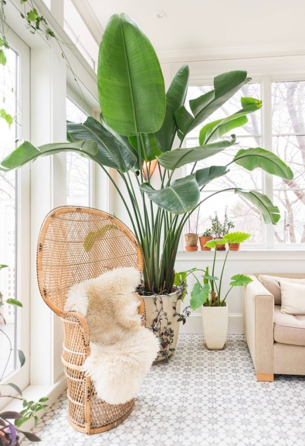 large-house-plants-Strelitzia-nicolai 2018 Trending: 15 Garden Designs to Watch for in 2018