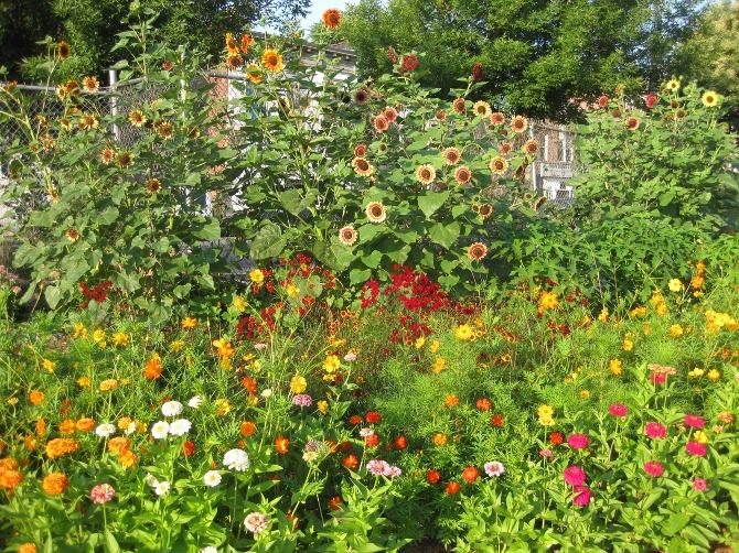 natural-dye-garden 2018 Trending: 15 Garden Designs to Watch for in 2018
