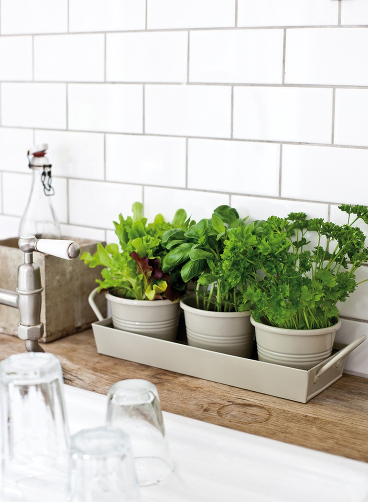 da9c81f27b29d5d3ba0e2e00ad122c84-kitchen-plants-kitchen-herb-gardens Great Ways to Make Your Dream Green Kitchen