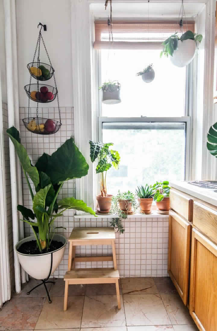 hanging-and-standing-potted-plants-kitchen Great Ways to Make Your Dream Green Kitchen