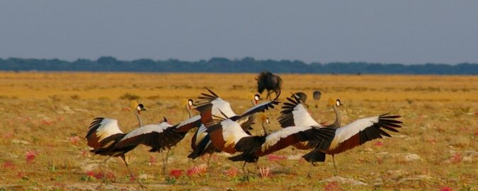 Luuwa-Zambia-675x270 20 Places to Explore for an Enchanting Holiday