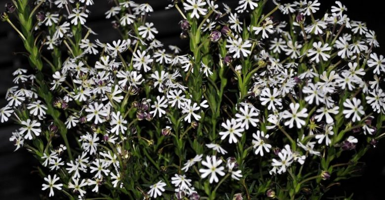Photo of Top 10 Flowers That Bloom at Night